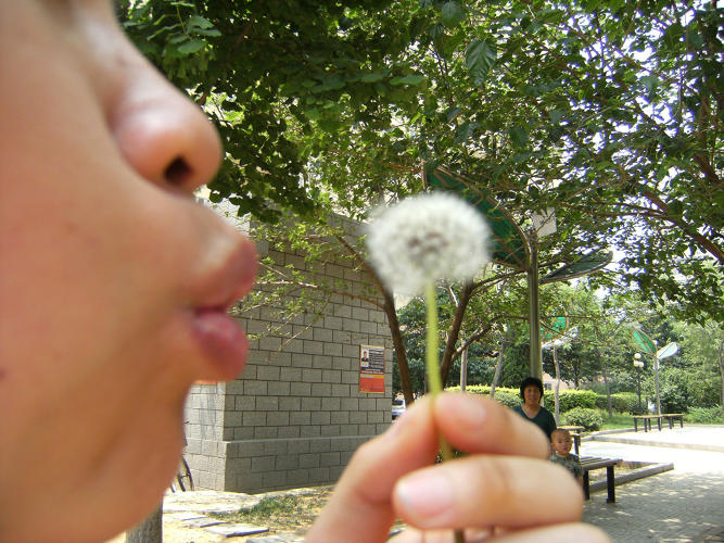 <p>Jin Ling, <em>Watching dandelion, watching blowing dandelion</em>, China, 2009.</p>