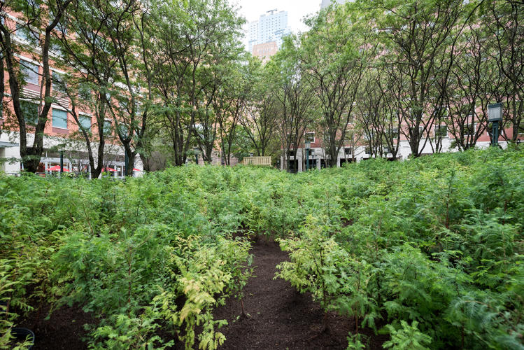 <p>Finch planted <em>Lost Man Creek</em> in a triangular plot in the center of MetroTech Plaza in downtown Brooklyn.</p>