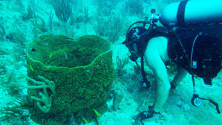 <p>Eduardo Esquenazi with sponge, Alligator Reef Florida.</p>