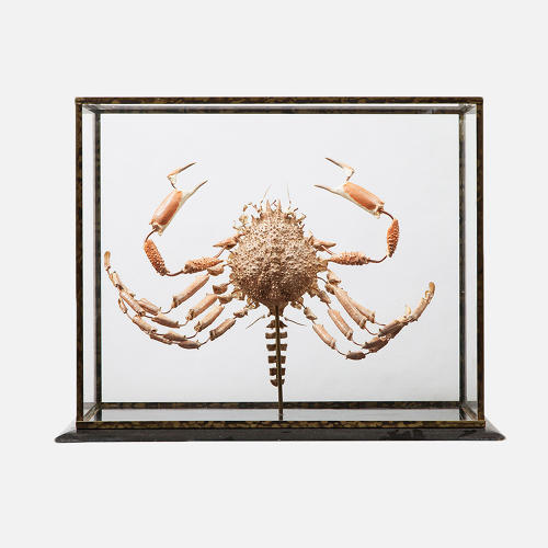 <p>Crab in Antique Glass Display, 20th Century, from Deyrolle in Paris.</p>