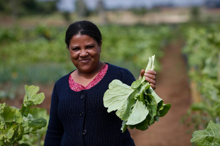 <p>Since 1986, Curitiba's Urban Agriculture Programme has used empty public spaces to encourage communities to grow their own food.</p>
