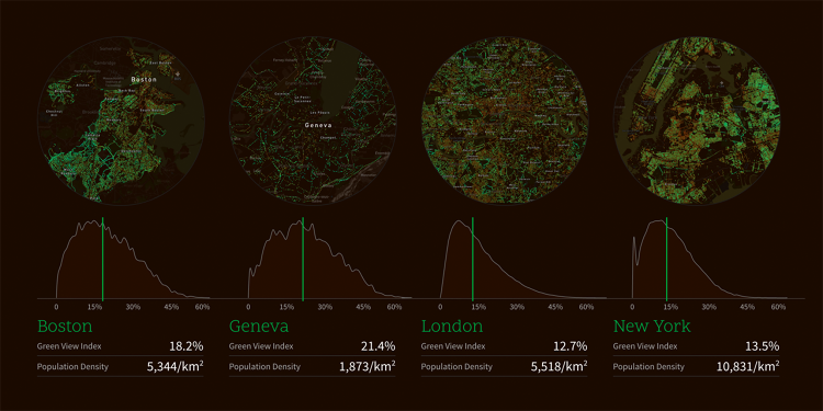 <p>How different cities' tree covers stack up</p>