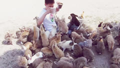And Now For Something Non-Apple Related: An Island Full Of Bunnies