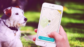 "This ""Uber For Dog Poop"" App Is Definitely Fake--Sorry, Sharing Economy Enthusiasts"