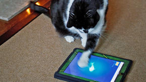 "Push Paws: ""Game For Cats"" iPad App Makers Stop Kitties From Buying Add-Ons"