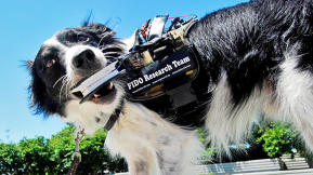Will This Wearable Device For Dogs Lead To The Most Amazing Google Glass App Of All?